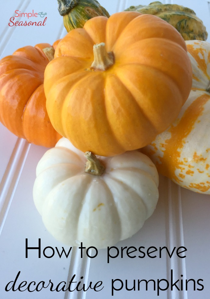 6 Ways to Preserve Pumpkins So They Last All Season! Tips for Carved & Decorative Pumpkins!