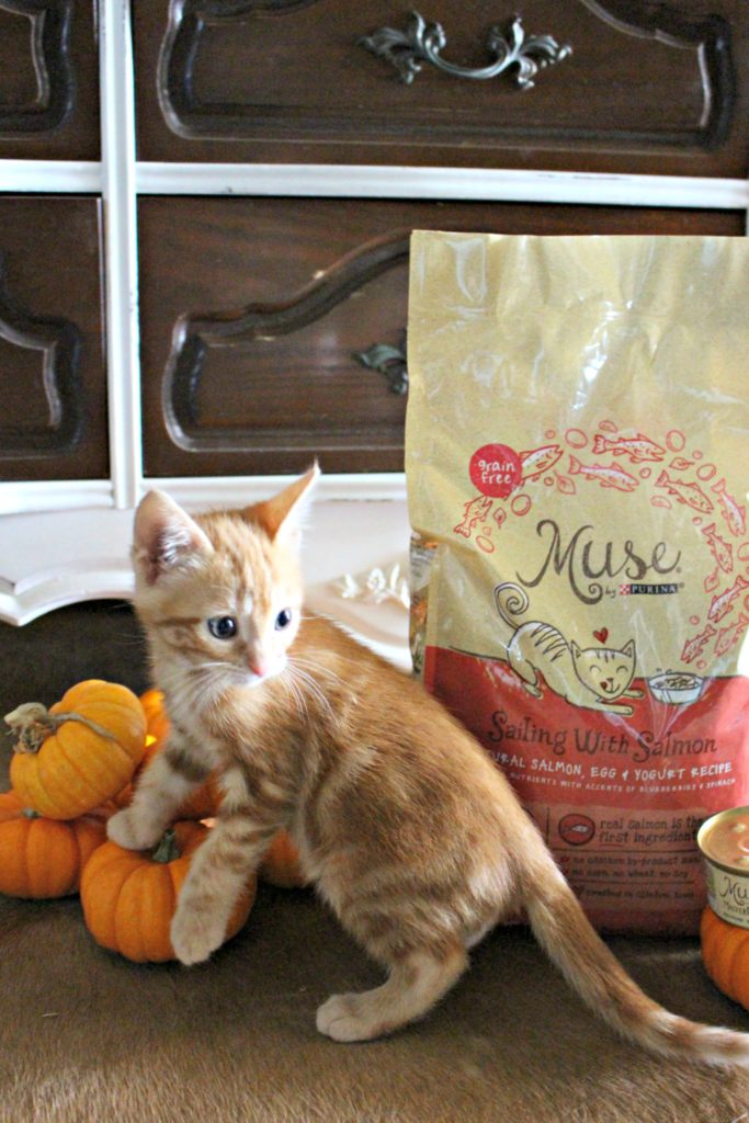 Keep your Cat Happy & Healthy with Purina® Muse® Wet & Dry Foods! #AD #MuseCleanPlate